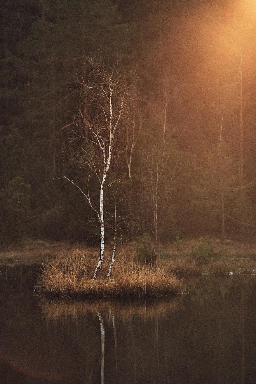 intentional-lens-flare-landscape-tree-01
