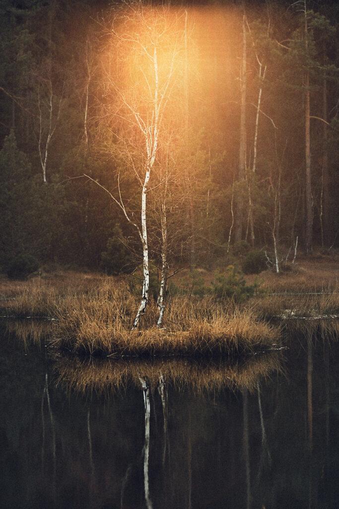 intentional-lens-flare-landscape-tree-02