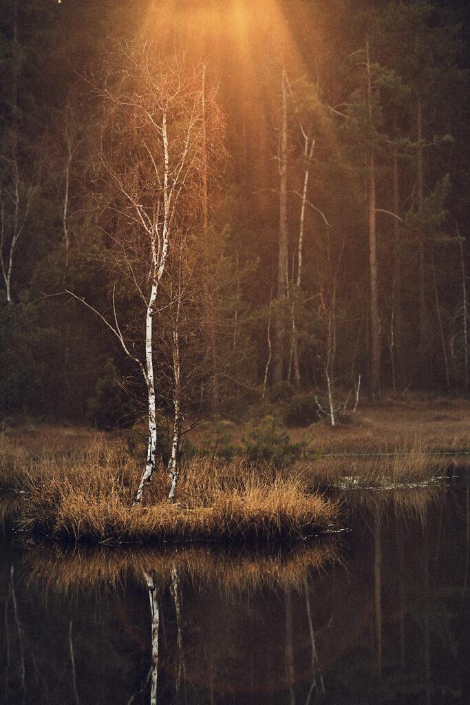 intentional-lens-flare-landscape-tree-03