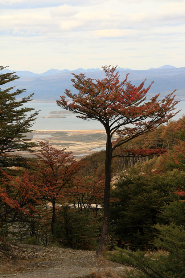 The Colours of Tierra del Fuego.