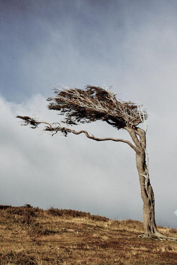 Tierra del Fuego: Windbent.